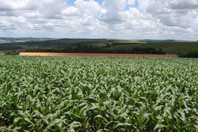 Safra de verão no Paraná deve ser recorde com 24,2 milhões de toneladas