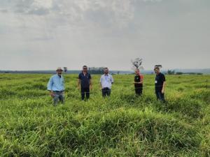 A ILP e seus efeitos na conservação do meio ambiente e aumento da produtividade em Moreira Sales