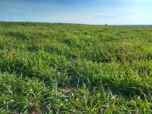 IDR- Paraná incentiva a adoção do sistema Integração Lavoura/Pecuária na bovinocultura de corte em Moreira Sales